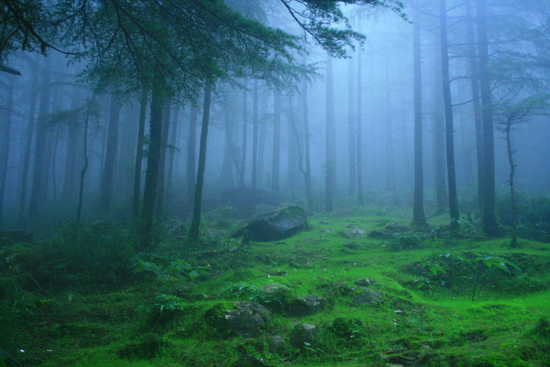 deodar-forest-himachal-pradesh