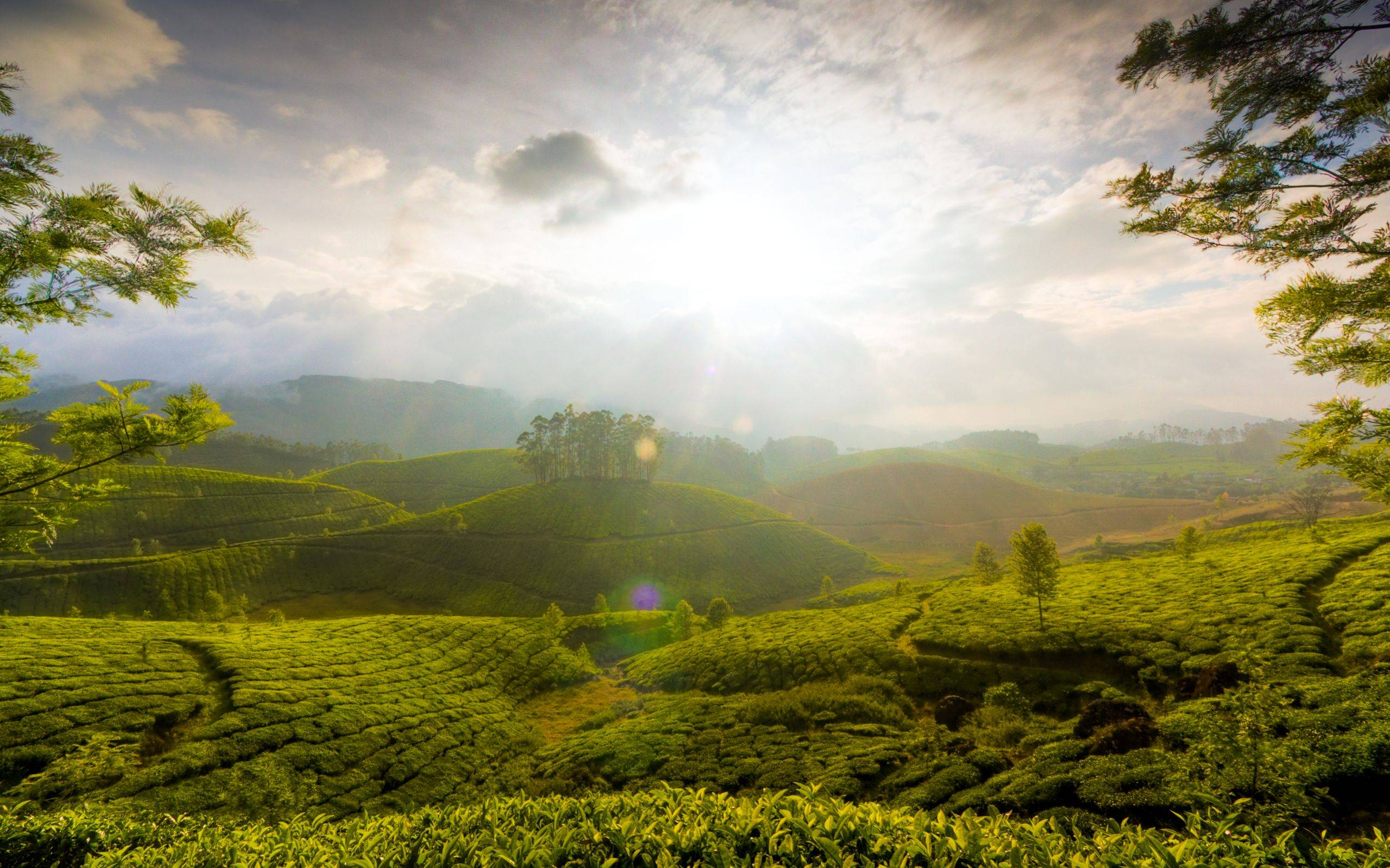 tea-garden-hill-of-munnar