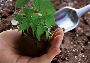 new saplings