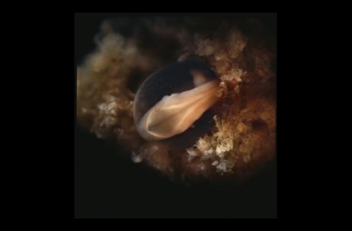 mouth pregnancy in Sperm