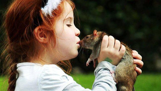 rats kiss