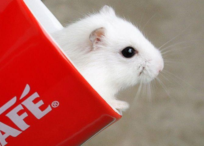 White Mice - 3